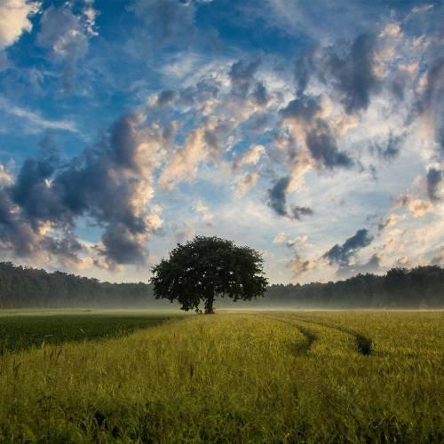L'Italia ritorni alla sua vocazione agricola e artigianale